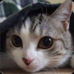 本気出す時計 ねこエディション:猫好きにはたまらない!?超キュートな時計アプリで萌える!