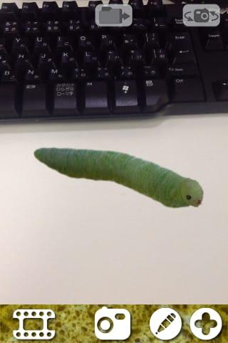 気味の悪い昆虫カメラ:リアルで気持ち悪い昆虫を一緒に写せるカメラ。