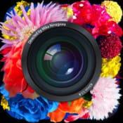 cameran蜷川実花監修 カメラ×あーちゃん:極彩写真。華やかキレイ!蜷川ワールドはやっぱり鉄板。