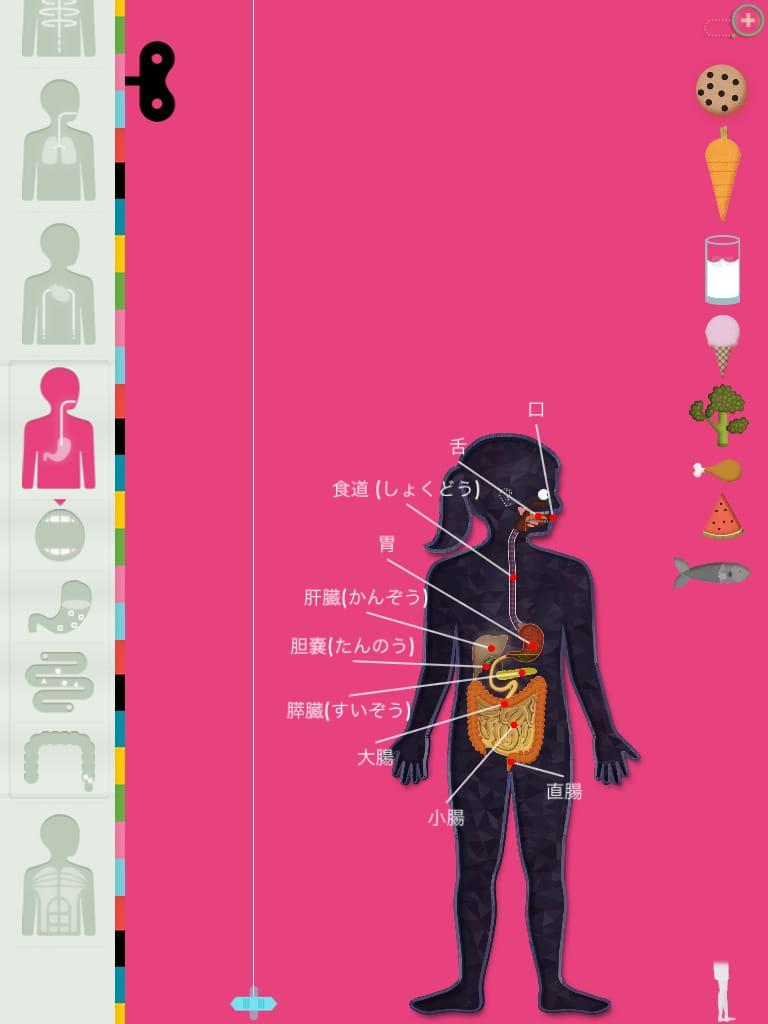 The Human Body:これは凄い!!アニメーションで体の不思議を遊んでまなべる!!
