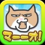猫好きが使いたいおすすめiPhoneアプリまとめ