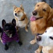 犬好きが使いたいおすすめiPhoneアプリまとめ