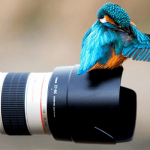 iPhoneでLive Photos(ライブフォト)を撮影する方法